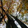 Jesień utrwalona na zdjęciu - konkurs dla miłośników fotografii