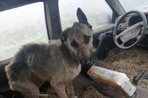 Psie piekło. 14 psów uratowanych przed śmiercią głodową [ZDJĘCIA]