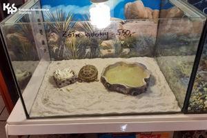 Nielegalne okazy zwierząt w sklepach zoologicznych
