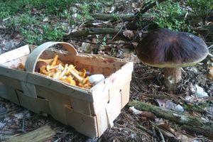 To końcówka sezonu zbierania grzybów, ale warto pamiętać o kilku zasadach, żeby nie zgubić się lesie