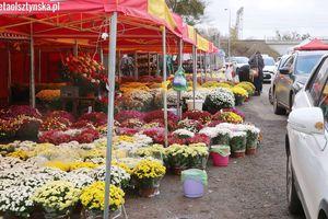 ARiMR: Pomoc dla producentów i sprzedawców chryzantem