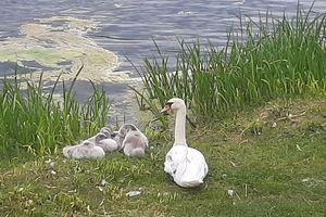 Wymień zdjęcie na prenumeratę: Jezioro Długie w Olsztynie