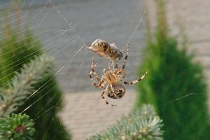 Wymień zdjęcie na prenumeratę: W pajęczynie