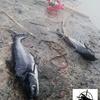 Ryby z akwarium trafiły na brzeg