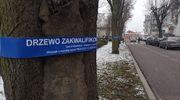 Chcą wyciąć drzewa w Parku Solidarności