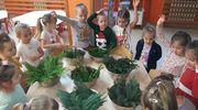 Dzień wiecznie zielonych roślin w Przedszkolu Miejskim w Nowym Mieście