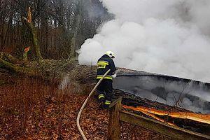 Spalony dom można odbudować, a tej straty nie da się naprawić. 500 – letni dąb przestał istnieć