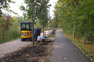 Zieleń w Olsztynie: część drzew zmieniła lokalizację