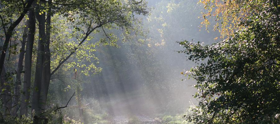 Wytrwałym las odsłoni swoje tajemnice