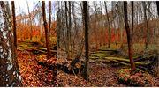 Prenumerata za zdjęcie: jesienny las Sebastiana Pawłowskiego