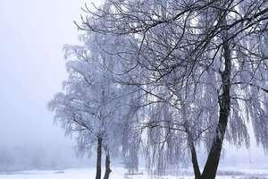 Zdjęcie Tygodnia nr 204. Wiejska droga zimą