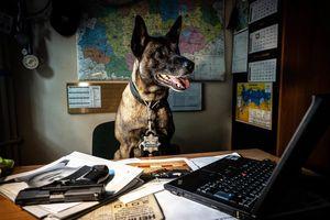 Pies policyjny z Olsztyna robi karierę na Twitterze. A to wszystko zza biurka!
