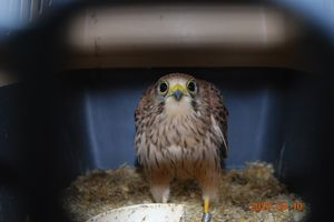 Leśnicy z Olsztyna ratują ptaki. Iloma skrzydlatymi pacjentami opiekowali się w 2020 roku?