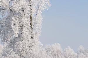 Nidzicka za zdjęcie: zimowe drzewo