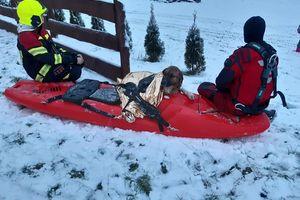 Pod psem załamał się lód. Uratowali go dzięki reakcji chłopca.