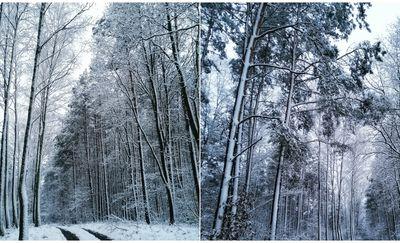 Prenumerata za zdjęcie: zimowy las w Tereszewie. Zdjęcia autorstwa Michaliny Cherkowskiej