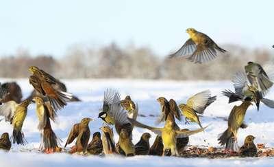 Czy na pewno wiemy, jak karmić ptaki zimą, by nie wyrządzić im krzywdy?