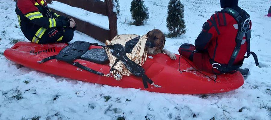 Akcja ratunkowa psa, pod którym załamał się lód.