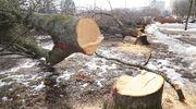 Najpierw wycinka, teraz nasadzenia. Gdzie pojawią się nowe drzewa?