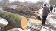 Wykonawcy jeszcze nie ma, a drzewa trafiły już pod topór [ZDJĘCIA, VIDEO]