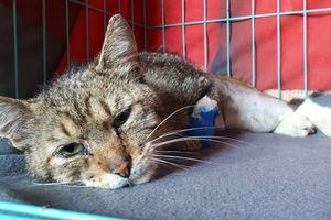 Kilkadziesiąt kociaków ma opuścić siedzibę Fundacji.