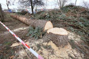 Rusza wycinka drzew pod budowę linii tramwajowej w Olsztynie