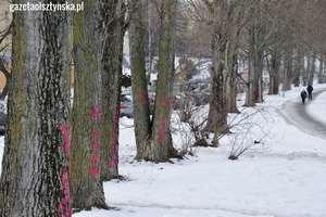 W Olsztynie pod nóż idą setki drzew [ZDJĘCIA]