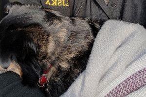 Przywiązała psa do śmietnika. Zmarzniętego czworonoga uratowali strażnicy miejscy