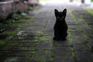 Miejska akcja sterylizacji kotek wolno żyjących