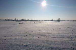 """""""Gazeta Giżycka"""" za zdjęcie - zima w Konopkach Małych"""