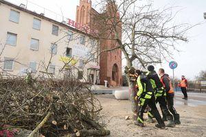 Drzewa w centrum Olsztyna poszły pod topór
