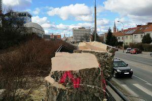 Czy trzeba było ściąć aż tyle drzew?