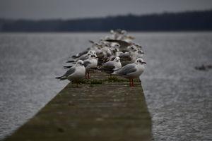 Gazeta za zdjęcie - Nad jeziorem w Giżycku...