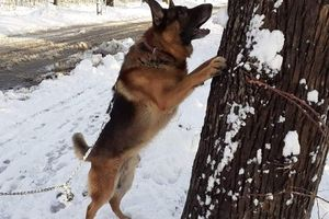 E-gazeta za zdjęcie. Psie zabawy ze śniegiem [ZDJĘCIA]