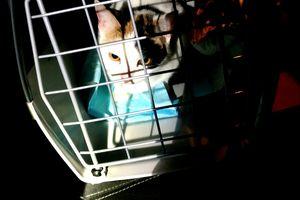 Zamknęli kota na balkonie przy 15 stopniowym mrozie. Dzięki szybkiej reakcji służb ratunkowych zwierzak został uratowany