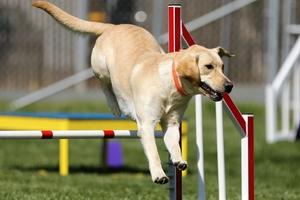 Eksperci są zgodni: wybieg dla psów to dobre rozwiązanie dla tzw. bagienka