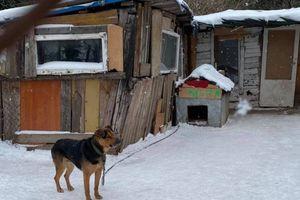 Psy w Młotecznie były trzymane w tragicznych warunkach