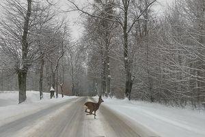 IKAT za zdjęcie: niespodzianka na drodze