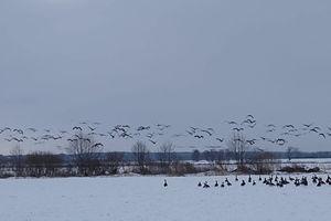 IKAT za zdjęcie: ptaki