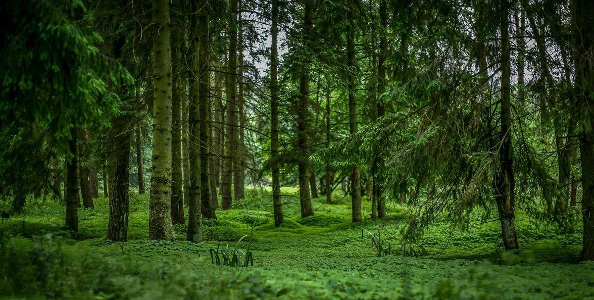 Lasy Puszczy Piskiej to nie tylko przyroda, ale również doskonałe miejsce do uprawiania aktywności fizycznej