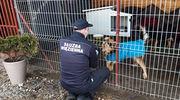 """Służba Więzienna wsparła """"Psi Raj"""" [ZDJĘCIA]"""
