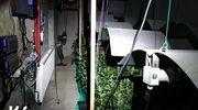 Papierosy i plantacja marihuany – akcja służb w 4 województwach