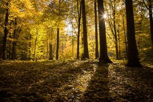 Leśnicy uspokajają: to pielęgnacja i odnowa lasu