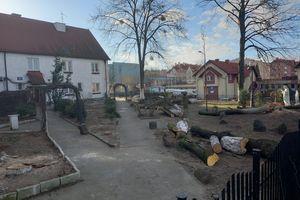 Proboszcz wyciął 14 drzew, nasadzi nowe