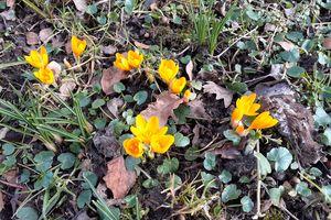 Wiosna zawitała do Dębowca