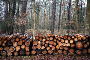 Cięcia rębne w lasach budzą niepotrzebne kontrowersje