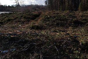 Wycięli stare i chore drzewa. Las produkował więcej CO2 niż tlenu