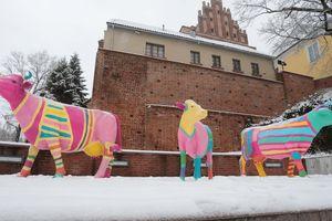 Olsztyński MOK przywołuje wiosnę kolorowymi krowami