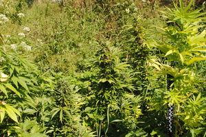 Zarzuty i policyjny dozór za posiadanie narkotyków
