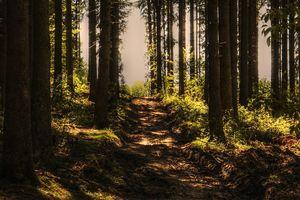 Majówka w lesie... na dziko i na legalu